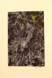 p0528 - Francesco Donato