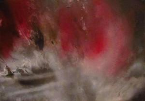 0034-Lelia Verona - pittura-spray-pigmenti su forex-100x70