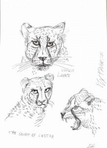 0037-Enrica-badas-my Cheetah - Penna Biro Su Carta- 29,7x42