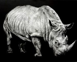 0139-Tiziana-sanna-rinoceronte-fusaggine Su Tela Preparata Con Fondo Acrilico-100x80