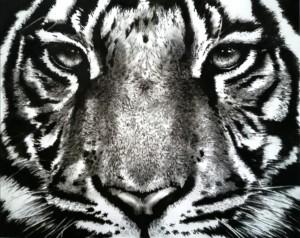 og103-Tiziana Sanna Wild Tiger Tecnica mista fusaggine e acrilico su tela preparata con gesso acrilico 100 cm X 80 cm